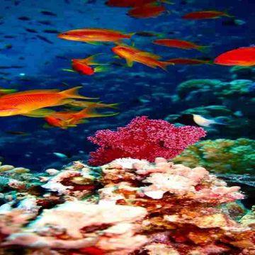 Corals at Andaman & Nicobar