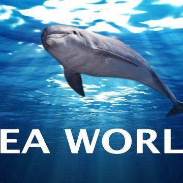 Seaworld 9