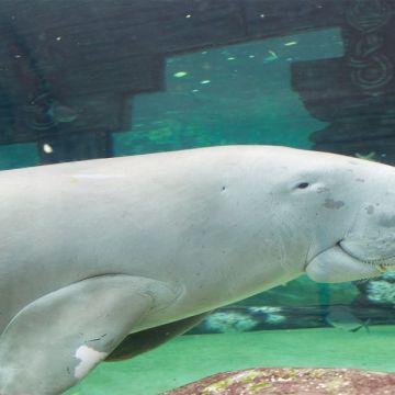 Sydney Sea life Aquarium 4