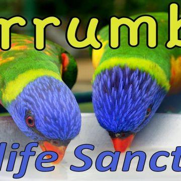 Currumbin Wildlife 5