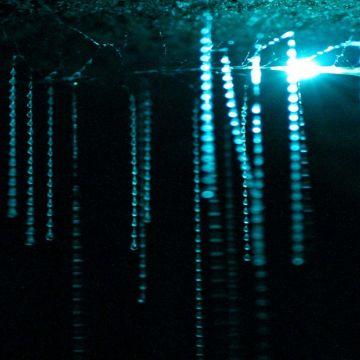 Waitomo Glow Worm Caves 3