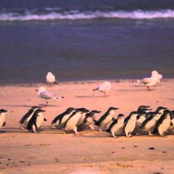 Melbourne Philip Island 1