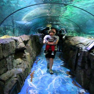 Sydney Sea life Aquarium 1